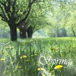 Аватар Spring (© Ksenya), добавлено: 02.05.2010 09:15
