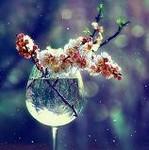 Аватар цветы вишни в стакане