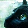 Аватар черный кот (© The_Exhausted_End), добавлено: 24.05.2010 11:44
