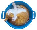 Аватар кот спит в тазике (© The_Exhausted_End), добавлено: 24.05.2010 11:57