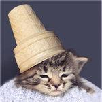 Аватар кот с мороженым на голове