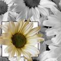 Аватар Ромашки (© Radieschen), добавлено: 02.06.2010 13:05