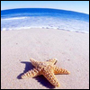 Аватар Морская звезда на пляже