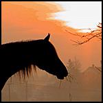 Аватар Закат (© Sansa), добавлено: 28.09.2010 23:46