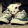 Аватар котик и кеды