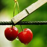 Аватар вишни на прищепке