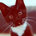 Аватар котэ глядит странно