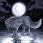 Аватар Волк в полнолуние (© Anatol), добавлено: 26.11.2010 14:28