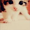 Аватар котенок с красивыми глазами