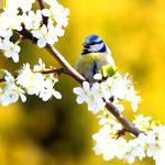 Аватар Птица на веточке (© Штушка), добавлено: 27.11.2010 20:27