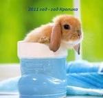 Аватар 2011 год-год Кролика (в сапожке)