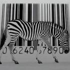 Аватар зебра и штрихкод