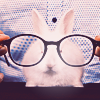 Аватар Кролик в очках