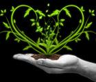 Аватар Земля в ладони, из которой выросло растение в форме сердца
