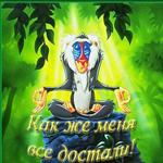 Аватар Рафики из мультфильма Король Лев (Как же меня все достали)