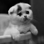 Аватар Милый котенок (© Electraa), добавлено: 13.02.2011 18:22