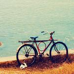 Аватар Велосипед (© Electraa), добавлено: 16.02.2011 16:52