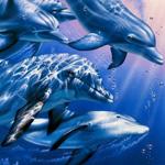 Аватар Игры дельфинов