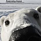 Аватар Нос белого мишки (любопытная...)