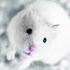Аватар Белый мышонок