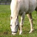 Аватар Белый конь кушает травку