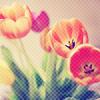 Аватар Тюльпаны