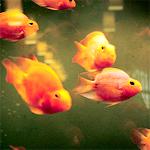 99px.ru аватар Рыбки