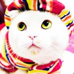 Аватар Белый кот в шапке и шарфе
