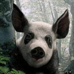 Аватар Украинская панда