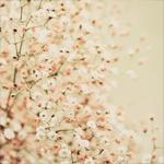 Аватар Красивые цветущие деревья
