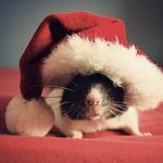 Аватар Крыса в новогодней шапке (© ColniwKo), добавлено: 23.03.2011 17:44