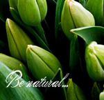 Аватар Нераскрывшиеся тюльпаны ('Be natural...' / 'Будь естественным') (© Радистка Кэт), добавлено: 29.03.2011 01:35