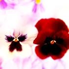 Аватар Анютины глазки (© Radieschen), добавлено: 10.04.2011 11:08