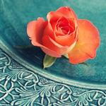 Аватар Бутон розы