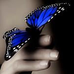 Аватар Синяя бабочка на руке у девушки