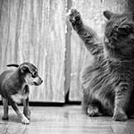 Аватар Кот, и собачка в два раза меньше его