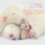 Аватар Спящие мышки ('Love mouse' / 'Влюбленные мыши')
