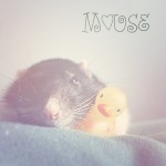 Аватар Мышь и резиновая утка ('Mouse' / 'Мышь')