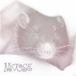 Аватар Мышь ('Mouse' / 'Мышь')