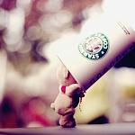 Аватар Плюшевый мишка и стаканчик Starbucks Coffee