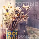 Аватар Завялые ромашки в вазе ('Мертвые ромашки')