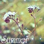 Аватар Красивые цветы в поле (Summer)
