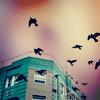 99px.ru аватар Рядом с домом летают птицы