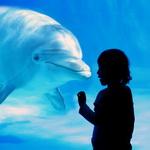 Аватар Девочка разговаривает с дельфином в океанариуме