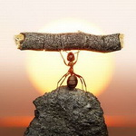Аватар Трудяга муравей тащит брёвнышко в муравейник, а время уже близится к закату, как говорится 'солнышко скроется, муравейник закроется!' (с)