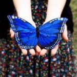 Аватар Синяя бабочка в руках у девушки
