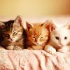 Аватар Три котёнка лежат на кровати