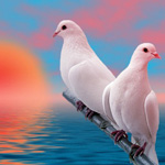 Аватар голуби (© Сабина), добавлено: 10.09.2009 09:28