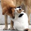 Аватар Кот обнимает собаку