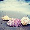 99px.ru аватар Ракушки на берегу